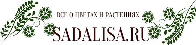 sadalisa.ru все о цветах и растениях