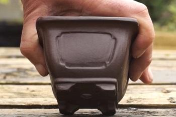 Правильный горшок для бонсай