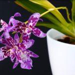 орхидея в лиловых тонах