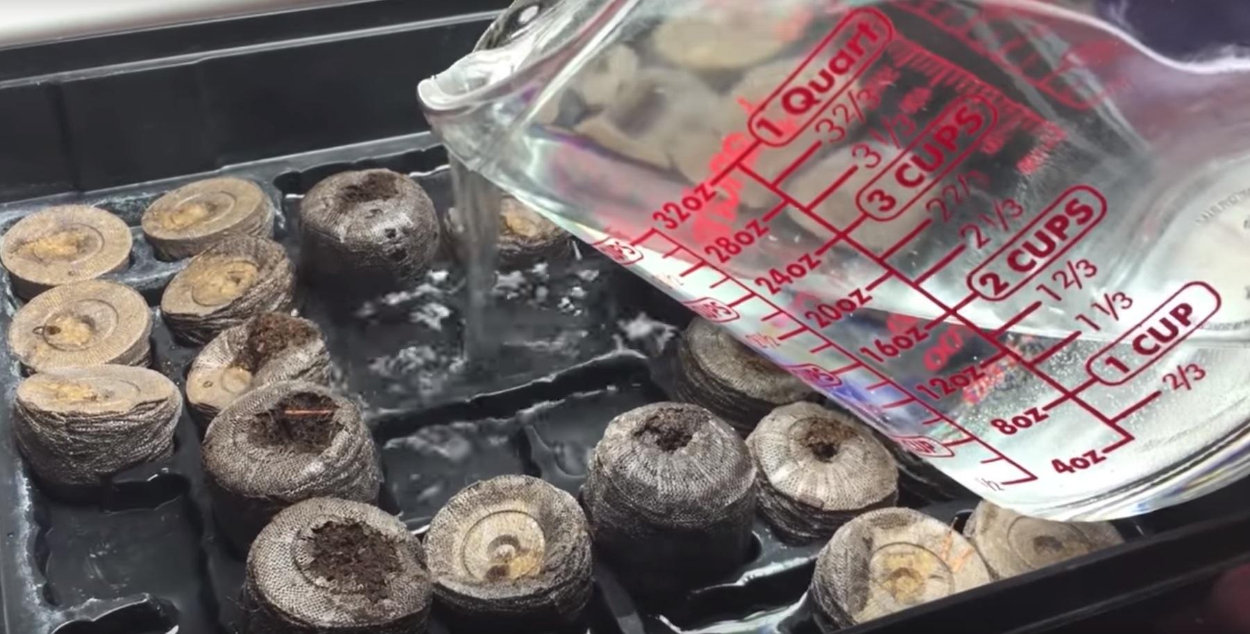 Выращивание рассады в торфяных таблетках.