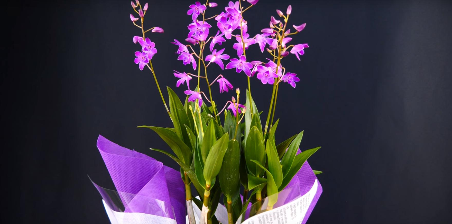 Орхидея дендробиум.