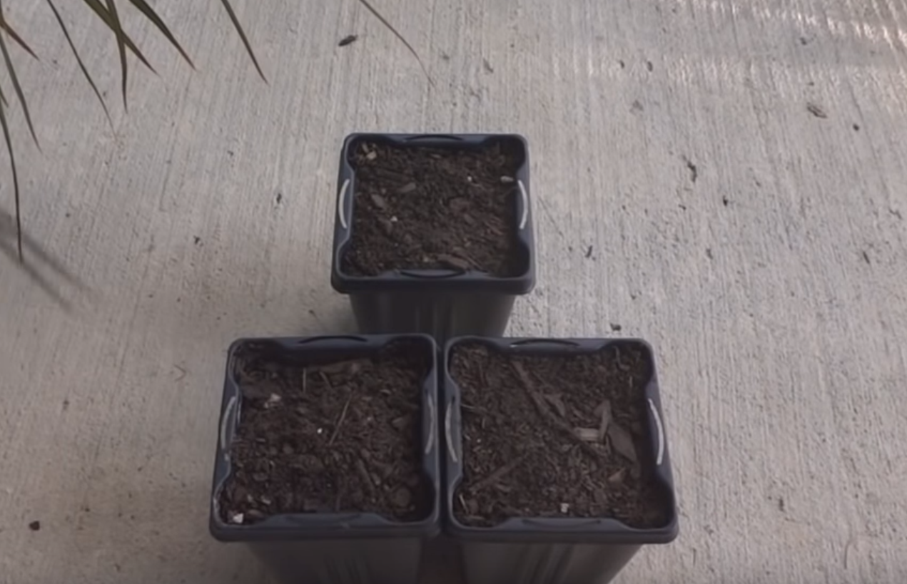 Горшки и почва для посадки драцены.