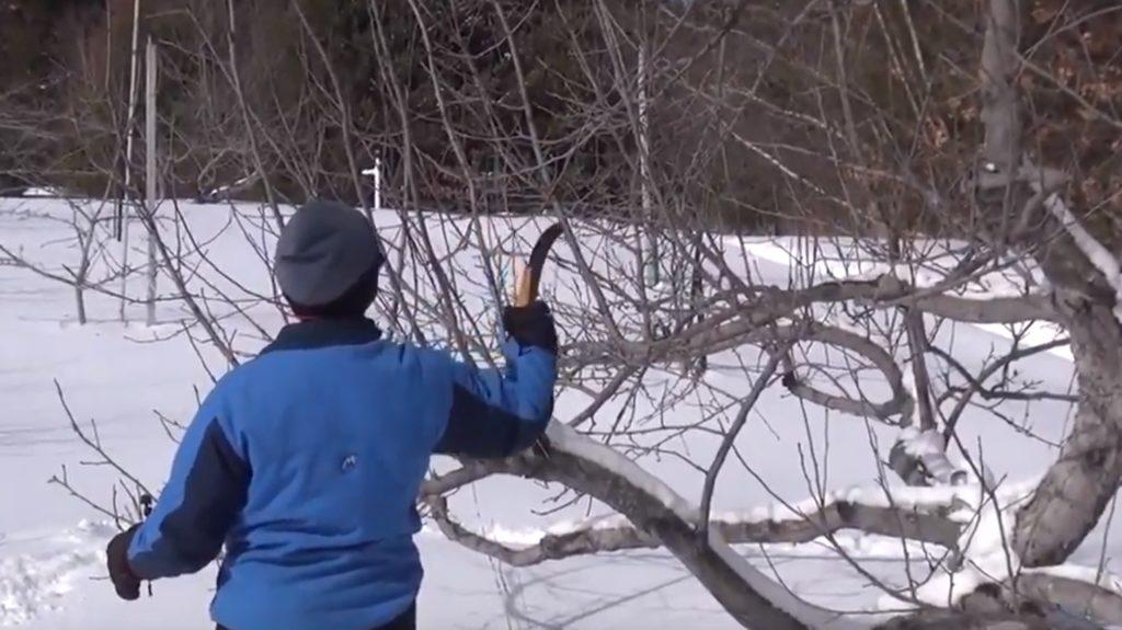 Обрезка деревьев в феврале.