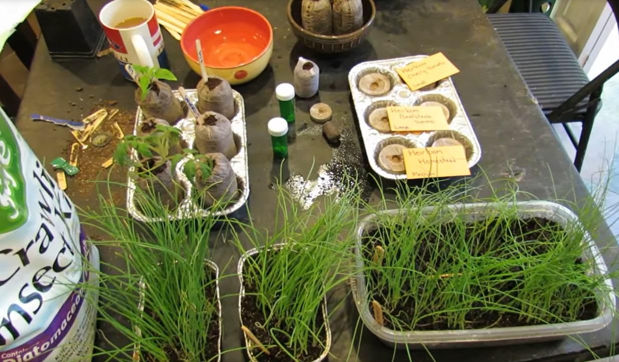 Полученные ростки из семян.