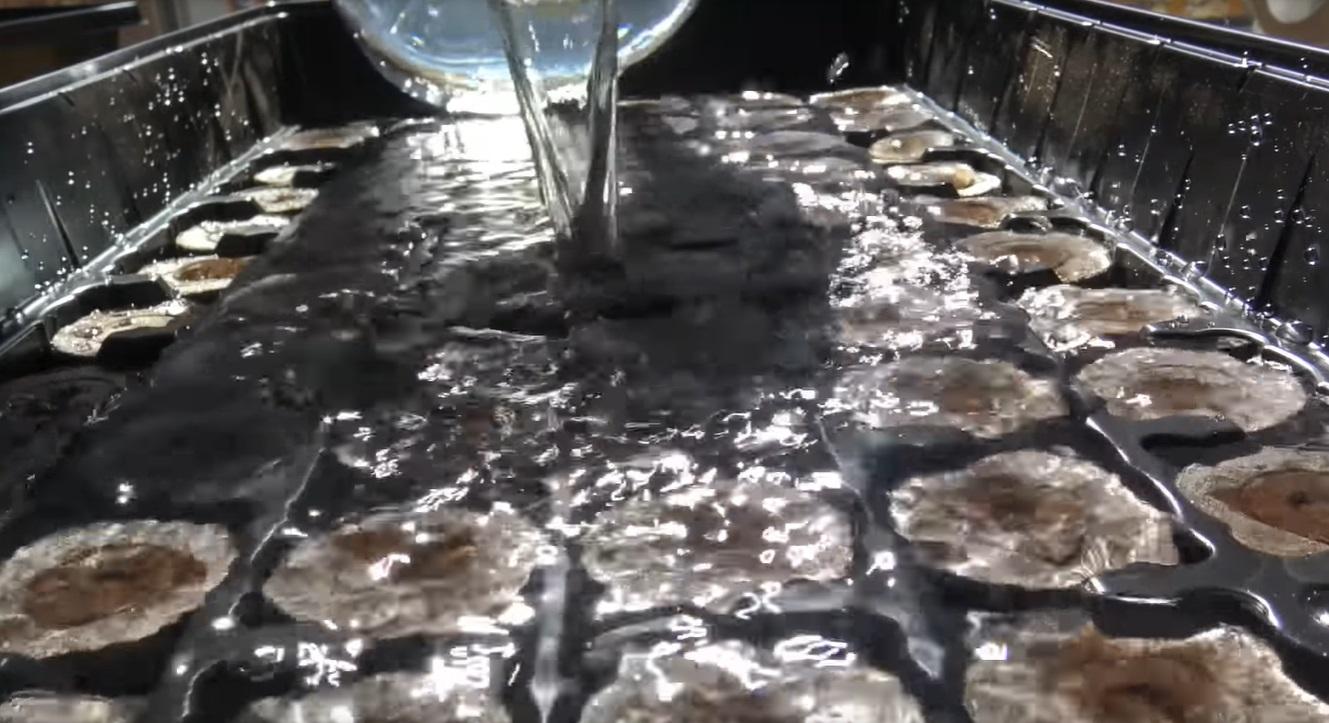 Заливка воды в контейнер с торфяными таблетками.