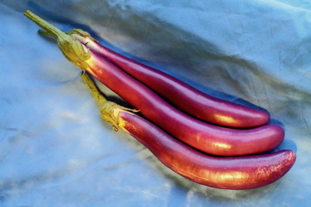 Лучшие сорта баклажанов: 130 видов популярных и необычных, для открытого грунта и теплицы, икорные, без горечи и другие
