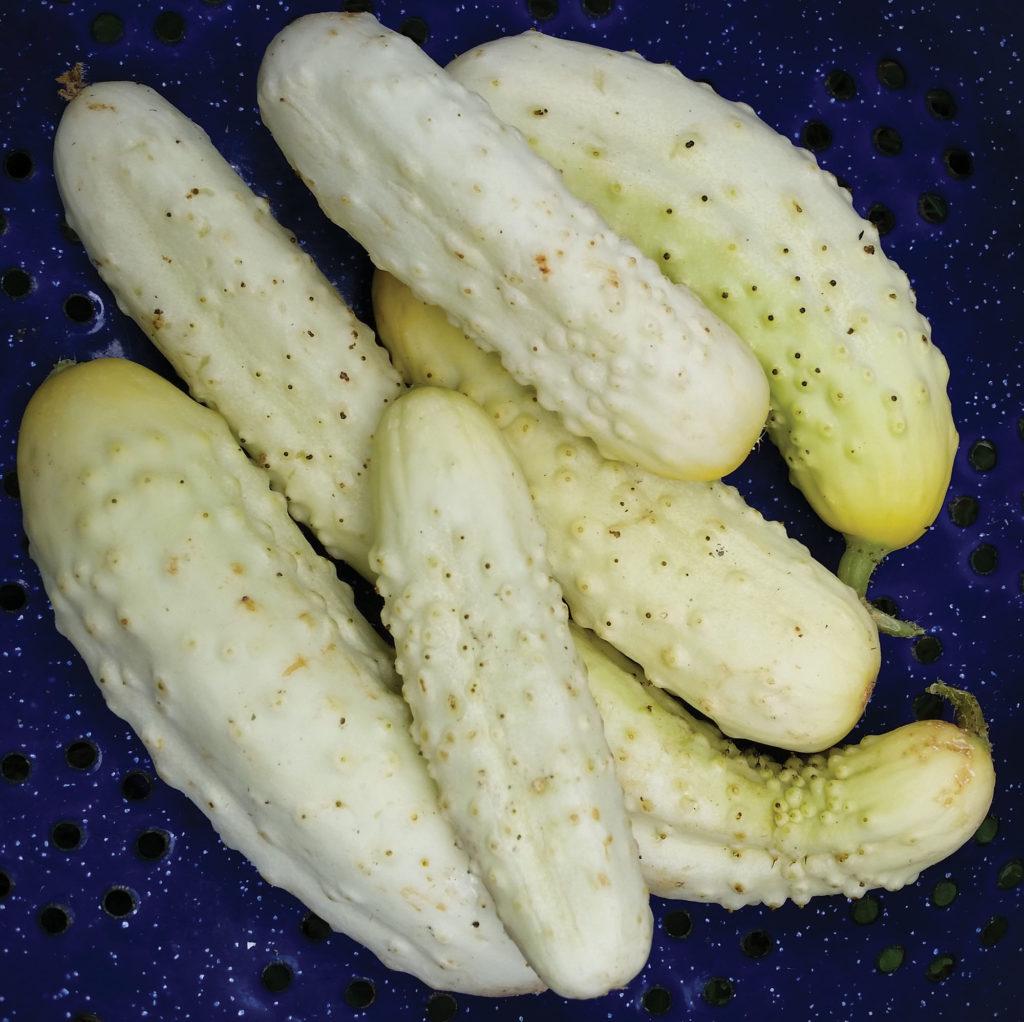 Белый деликатес