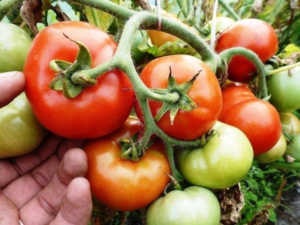 Удобрение для помидор и перца