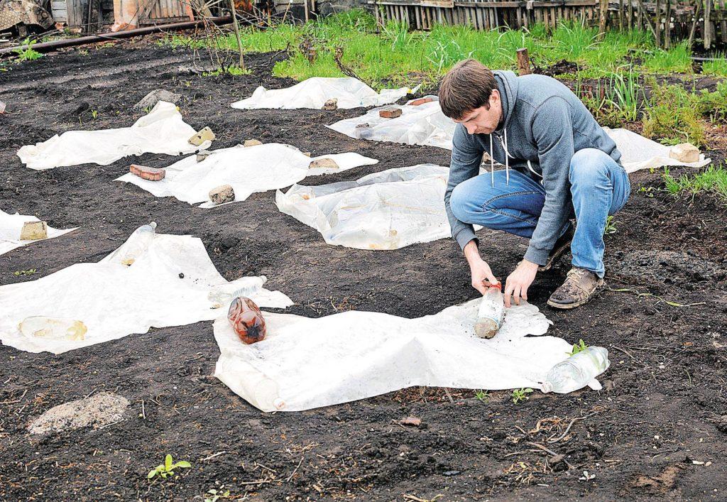 Организация подготовки винограда к зимнему периоду