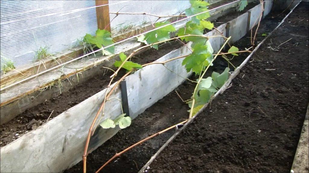 Обустройство траншеи для винограда.