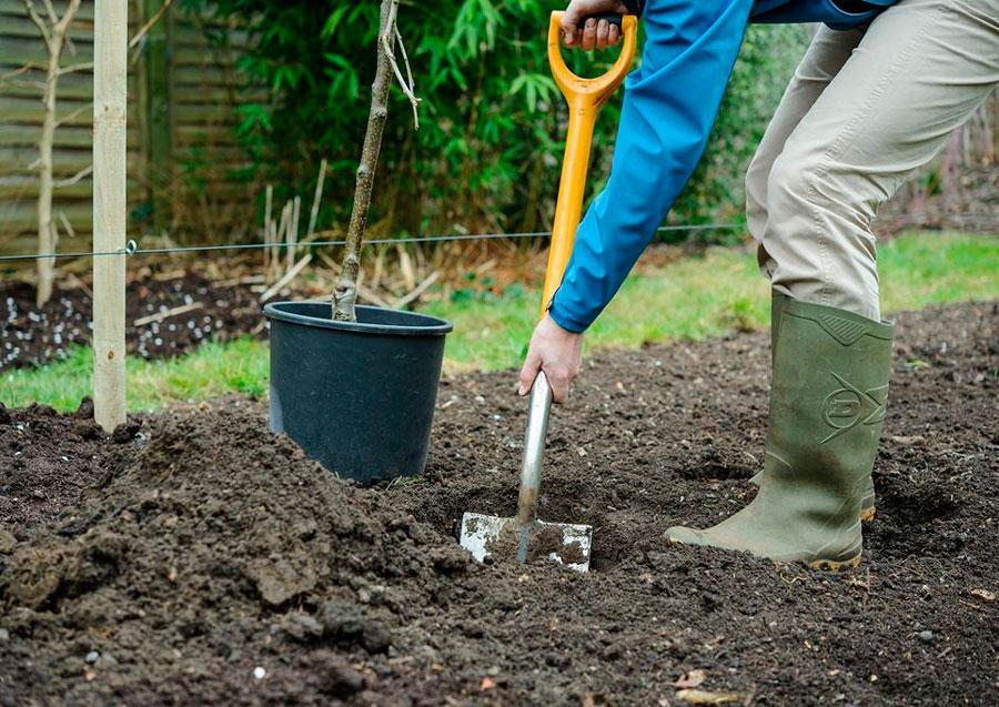 Почва для посадки яблони.