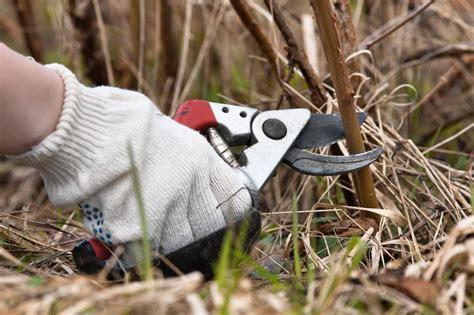 Инструменты для обрезки малины.