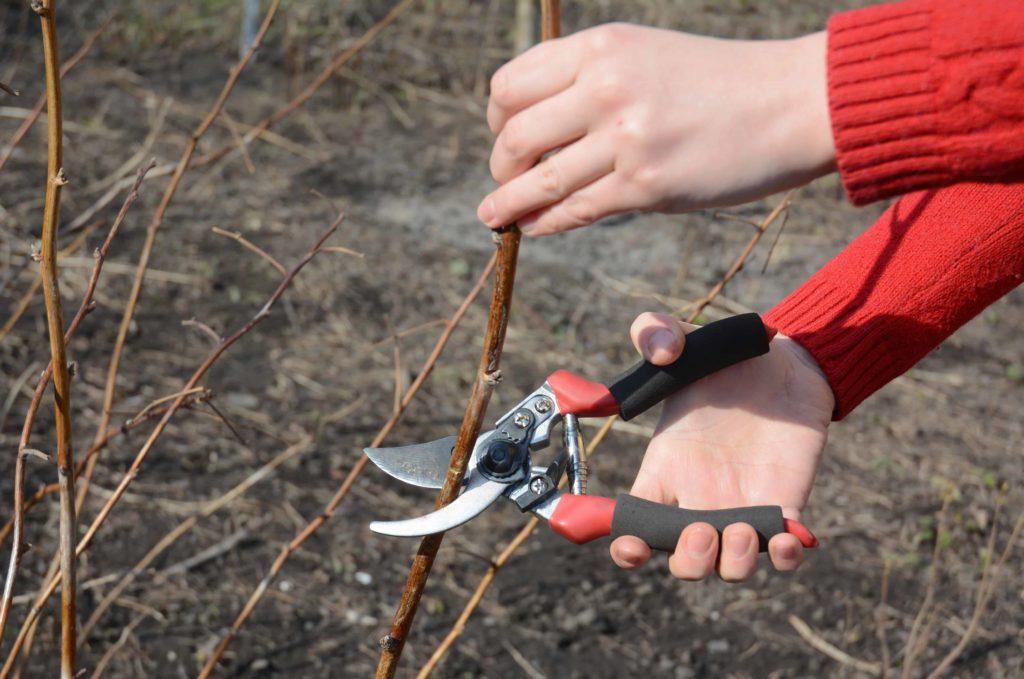 Как обрезать малину осенью.