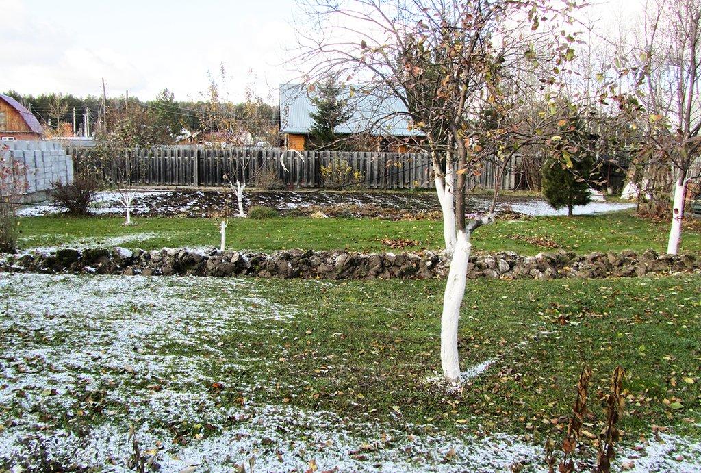 Как подготовить дерево к зиме.