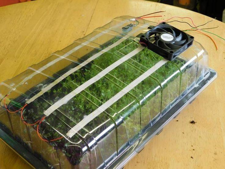 Самодельный проращиватель для микрозелени.