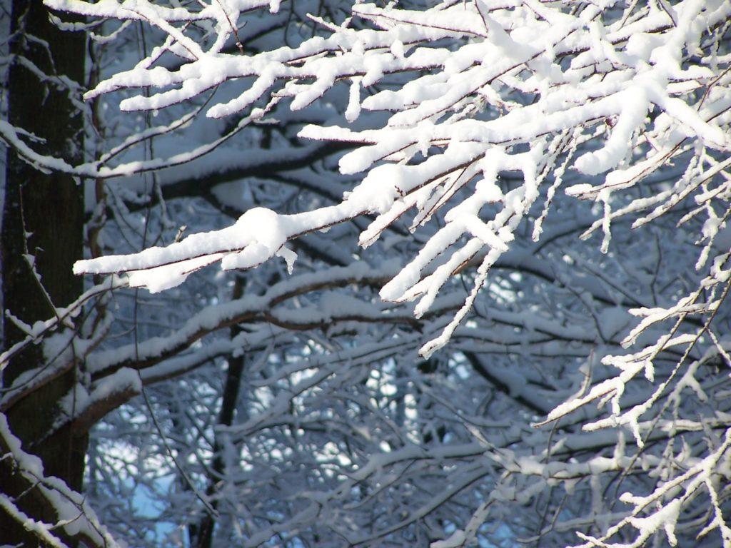 Отряхивание снега с веток.