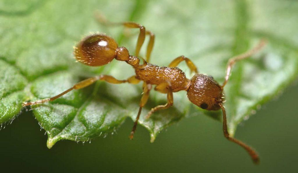 Как избавиться от муравьев на участке навсегда: 50 проверенных средств и советы садоводов